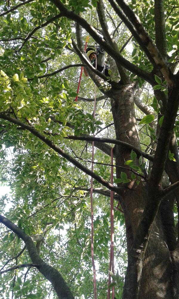 potatura alberi e piante 360 service di ceron alessandro